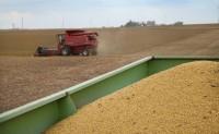 中国肉类消费激增 引爆美洲大豆市场
